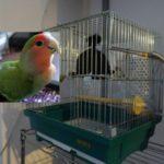 鳥かごカバー