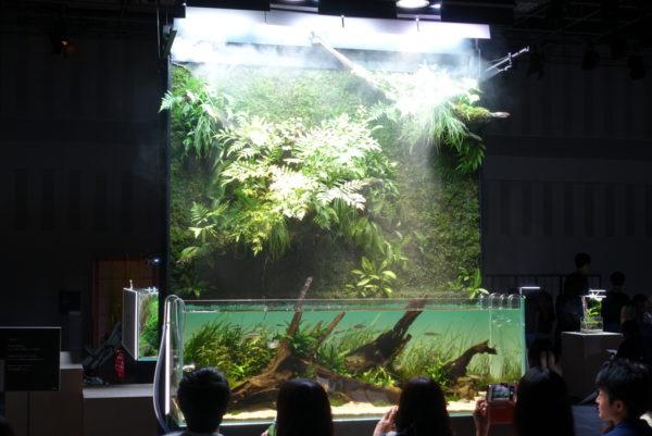 水の森の茶室で巨大な水上葉の展示がある水槽
