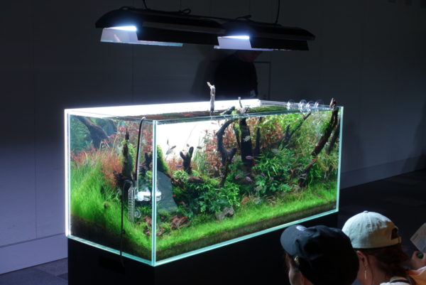 水の森の茶室の水槽を眺める少年たち
