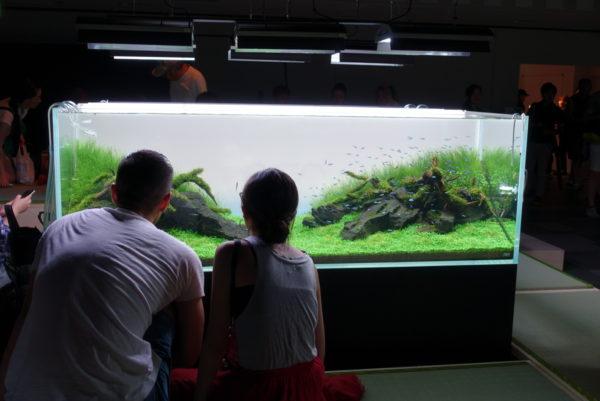 水の森の茶室の水槽を眺める恋人たち