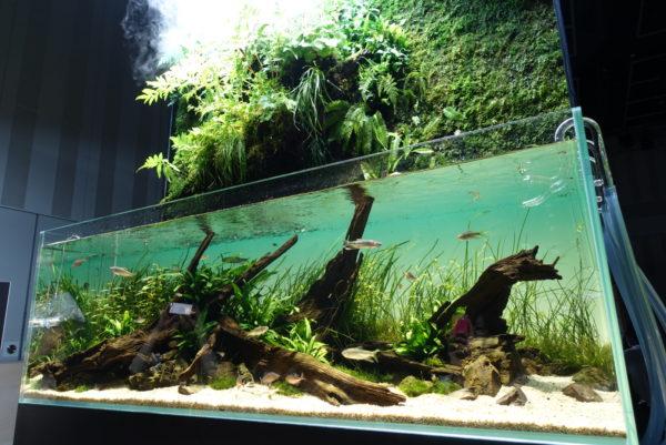 水の森の茶室の水槽の中