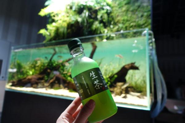 水の森の茶室の水槽と生茶