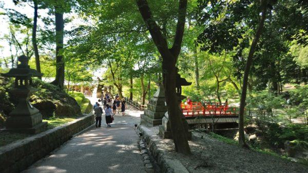 京都の伏見稲荷大社の緑