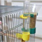 小鳥の自動エサやり器と自動給水器でお世話を楽に清潔にできる!文鳥にフードフィーダーを使ってみた。