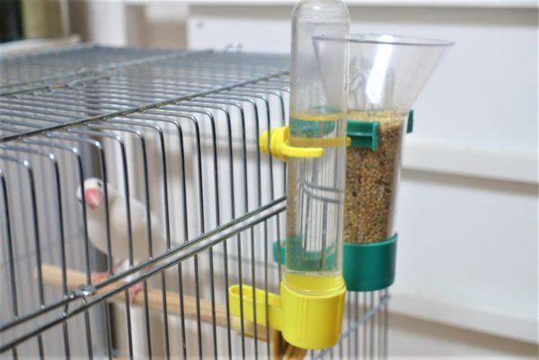 自動エサやり器と自動給水器をケージに設置