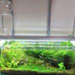 【アクアリウム】自動給水器「水足しくん」が夏に大活躍!自動で水槽に水を足してくれる!