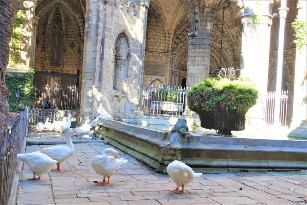バルセロナのカテドラル(サンタ・エウラリア大聖堂)の中庭にいるガチョウ