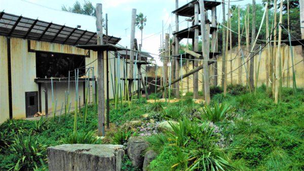 オーストラリアのメルボルン動物園のオラウータン