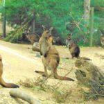 【オーストラリア】動物との距離が近い!メルボルン動物園がおすすめの理由!