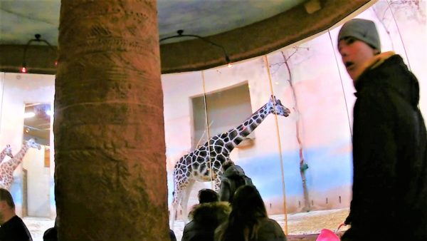 【穴場】リフトがある広大な敷地のプラハ動物園!迫力満点な動物たちにあえる!