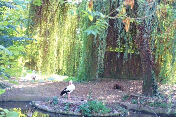 【クロアチア】ザグレブ動物園に行ってきた!チケット料金や開園時間もまとめました。